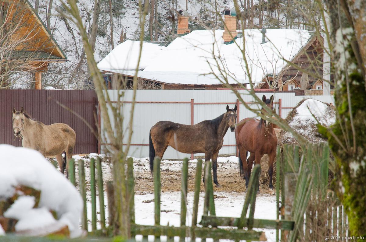 Кони в Дютьково.