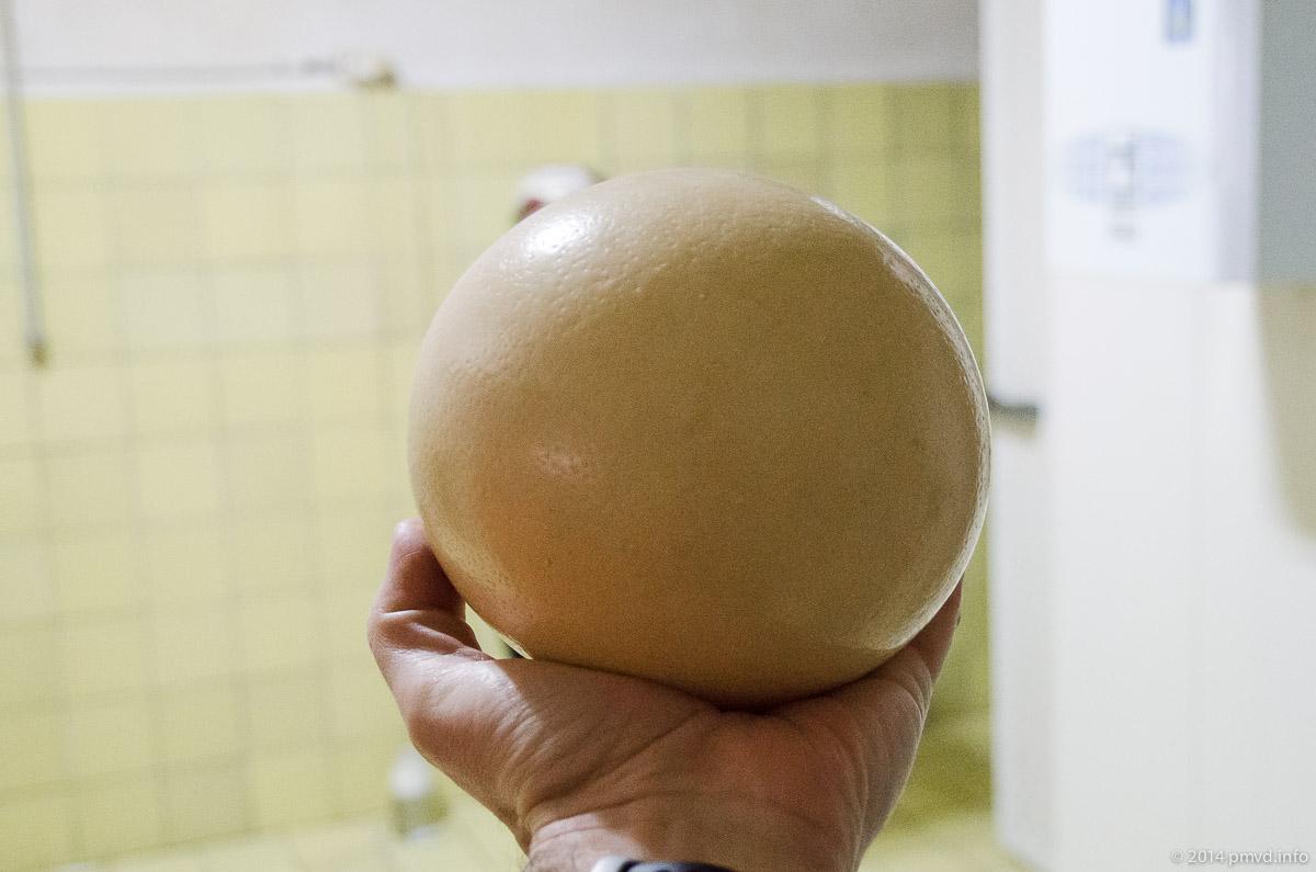 Русский страус. Страусиное яйцо