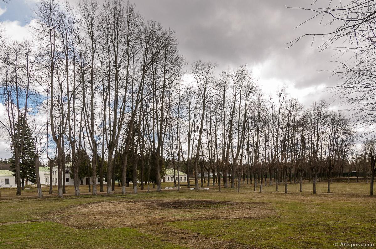 Липовая аллея в усадьбе Середниково