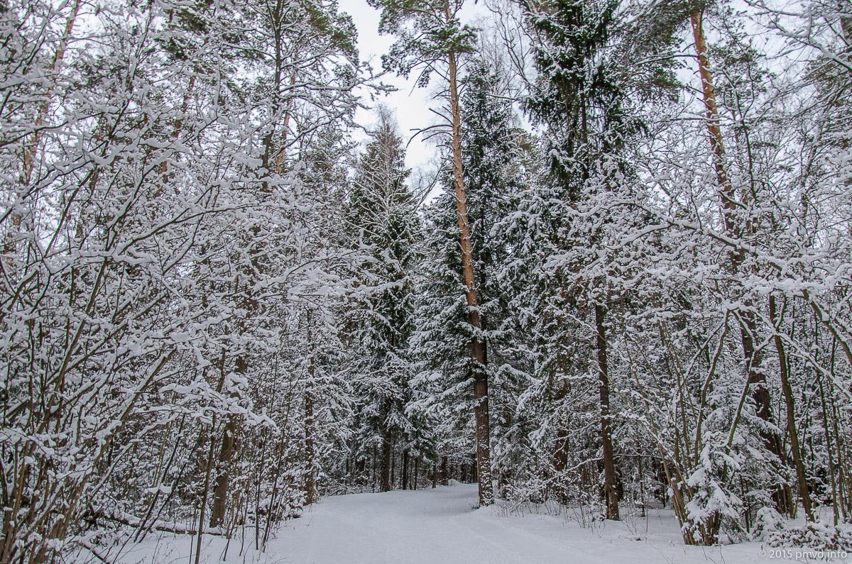 лыжня в красногорске схема проезда