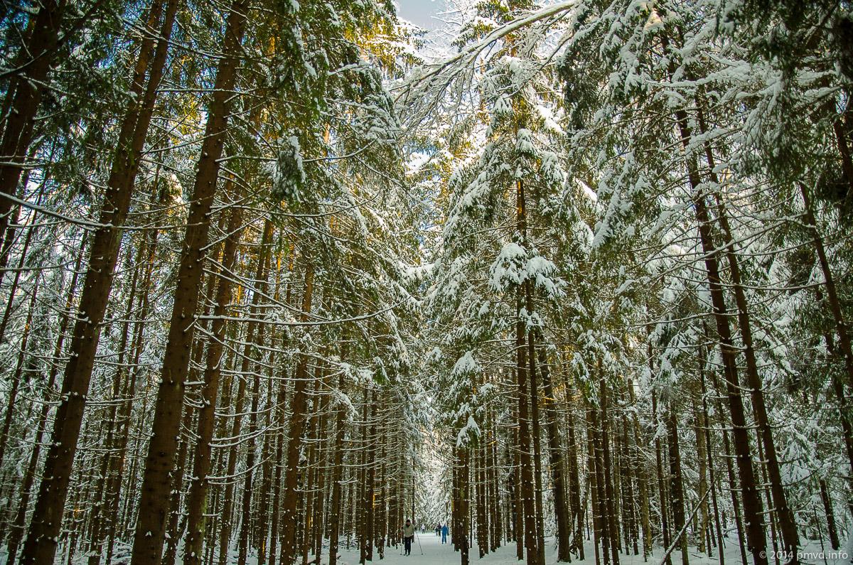 Лыжня в Троицке.