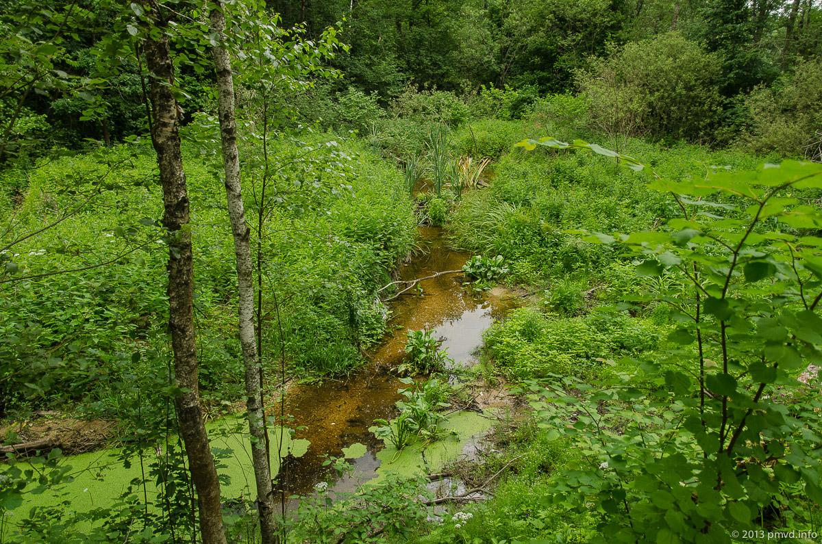 Лесной ручей в Серпуховском районе