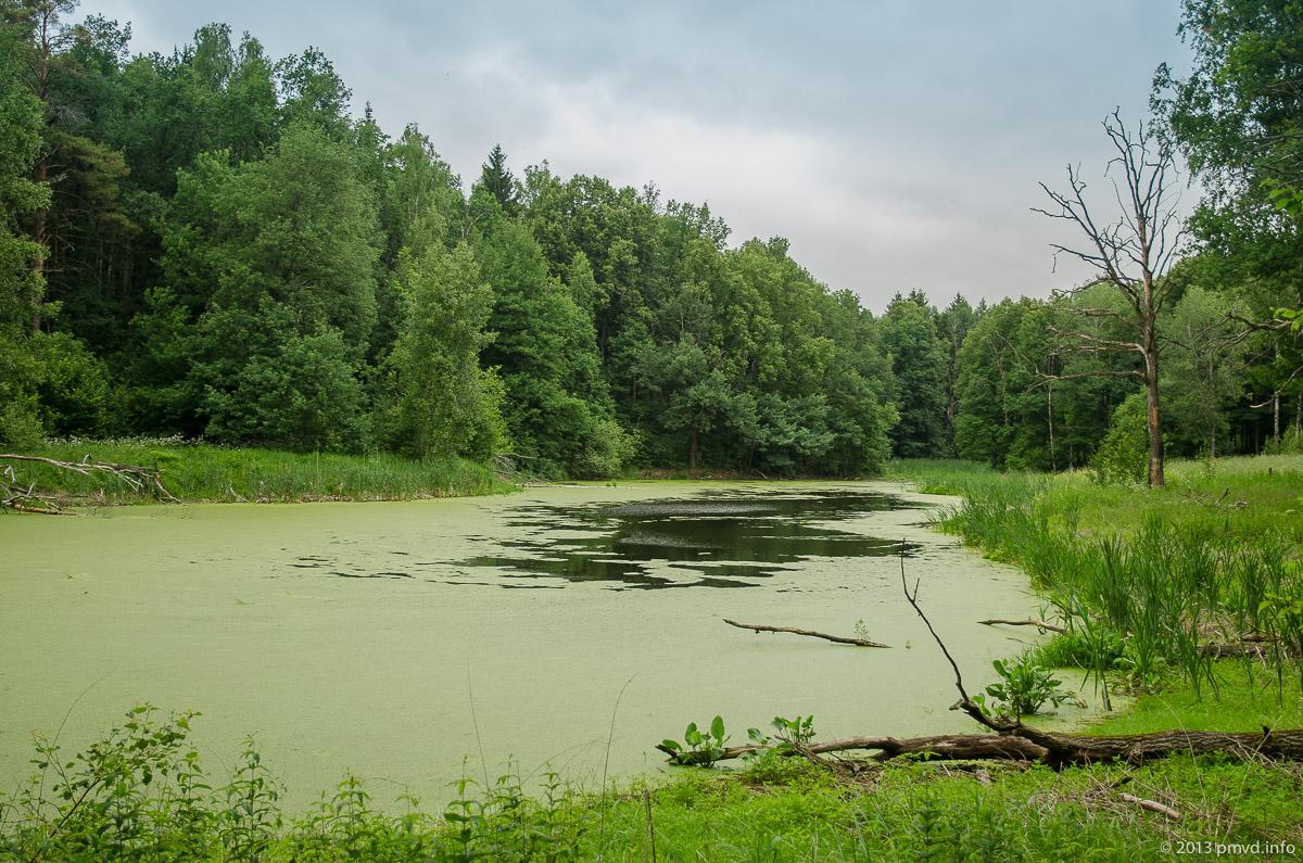 Лесное озеро в Серпуховском районе