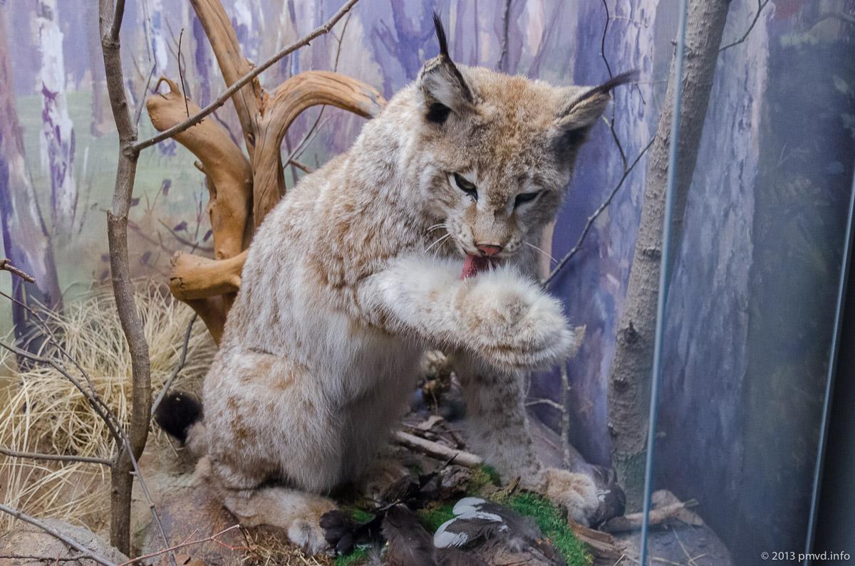 Заповедник Приокско-Террасный живоотные