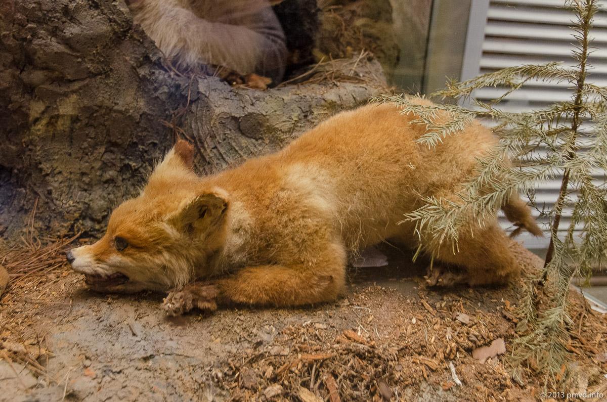 Заповедник Приокско-Террасный животные