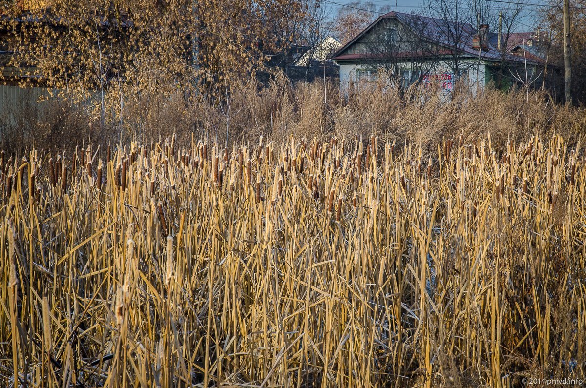Пруд в деревне Мамоново
