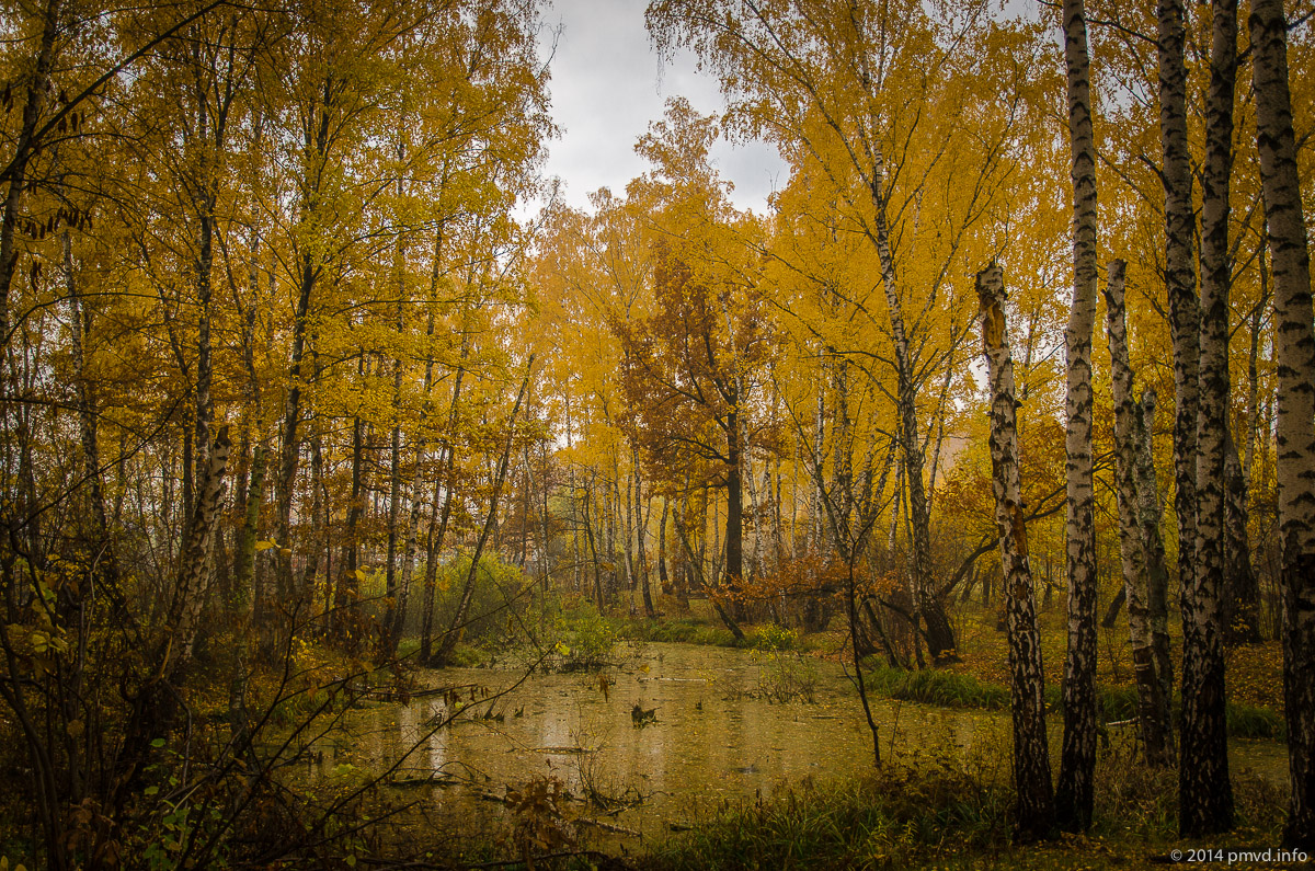 лес в деревне Мамоново