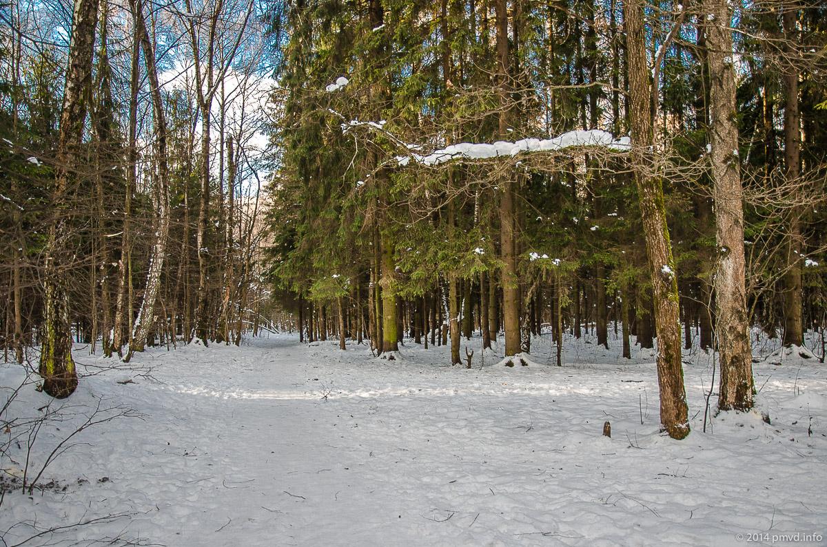 Лыжня в Трехгорке