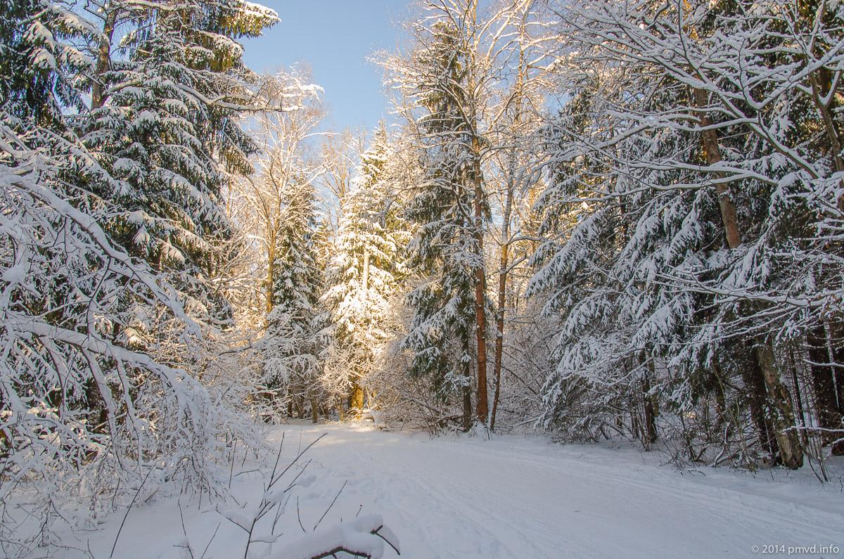 Красногорск. Лыжня