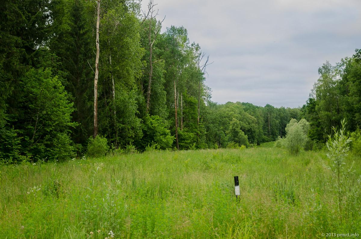 Лес между деревьями Костино и Данки
