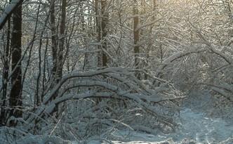 Зима-2015. Топ-10